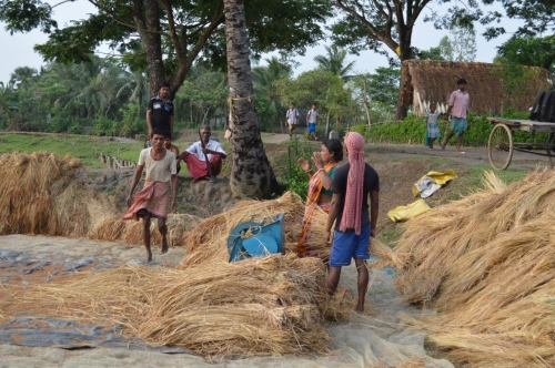 Villagers dehusking paddy